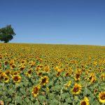Co rolnik musi wiedzieć o opryskach?