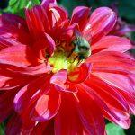 Które owady sprzyjają roślinom?