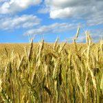 Nawozy azotowe – które najlepsze?