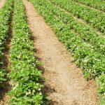 Nawozy ekologiczne – jak chronić swoje uprawy?