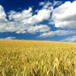 Ogród obfitości – kiedy przestać nawozić?