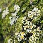 Zmiana Ph gleby za pomocą nawozu – czy to bezpieczne?